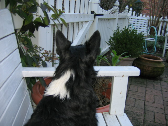 Keeping watch over my backyard Kingdom.