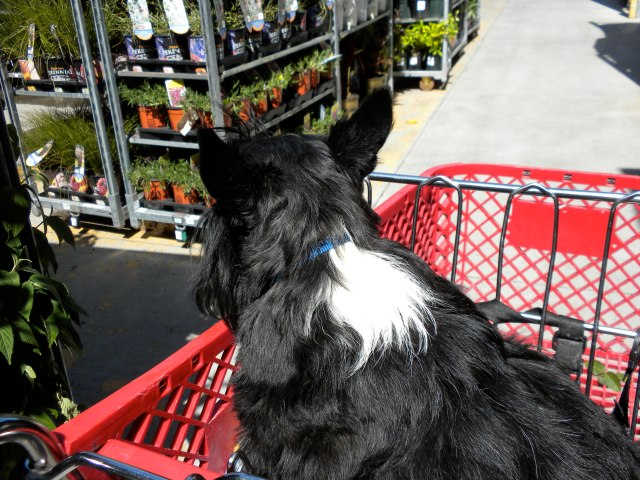 Wheee! I love a ride in a shopping cart!