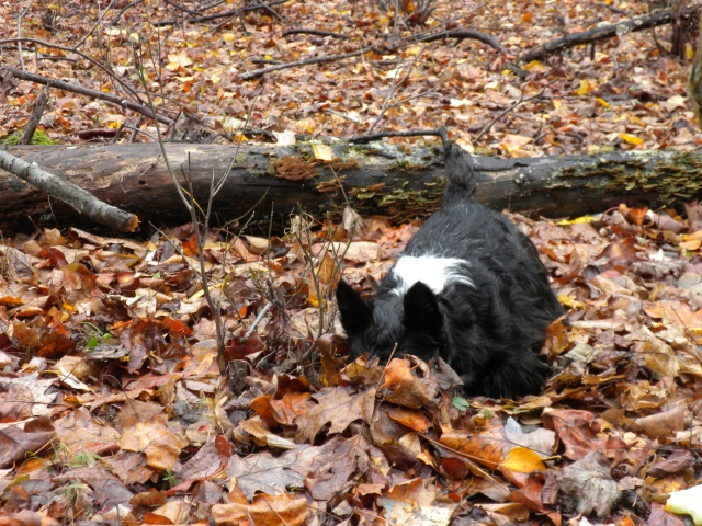 diggin in the leaves