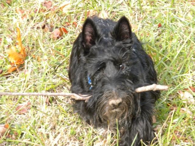 muddy stick