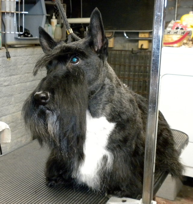 at the groomer's