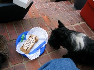 My first birthday. YUM! Leave it to Three Dog Bakery to bake up a nice cake.