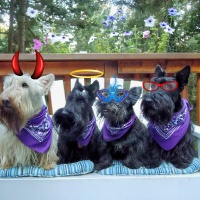 Friday's Foto Fun - The Beteag Scotties