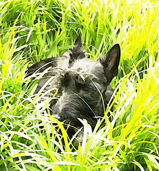 Watercolor Wednesday - Splendor in the Grass