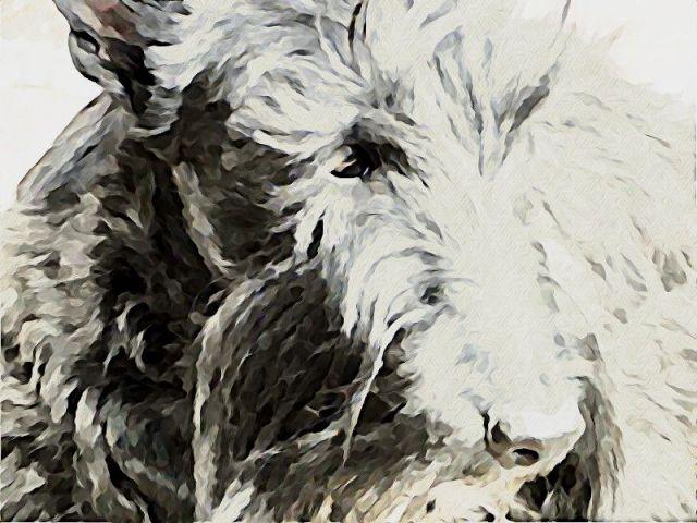 Stuart-watercolor