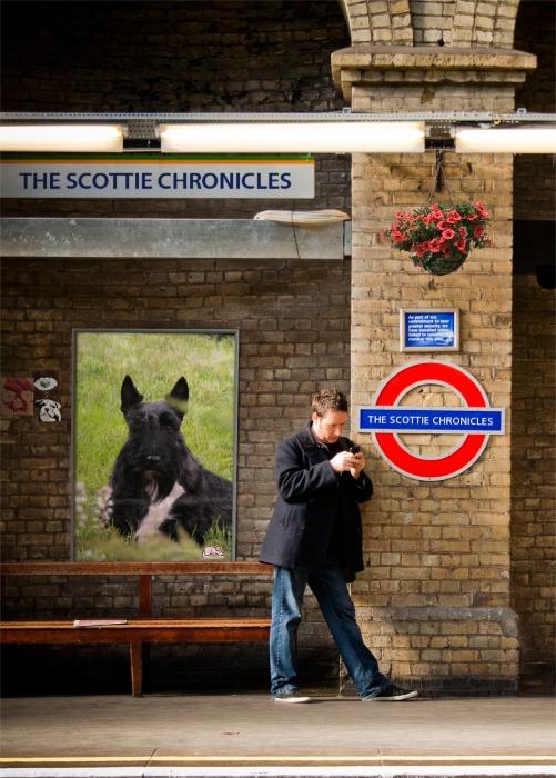 Notting Hill Stuart
