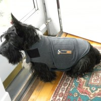 It Might Turn Into a Thundershirt Day