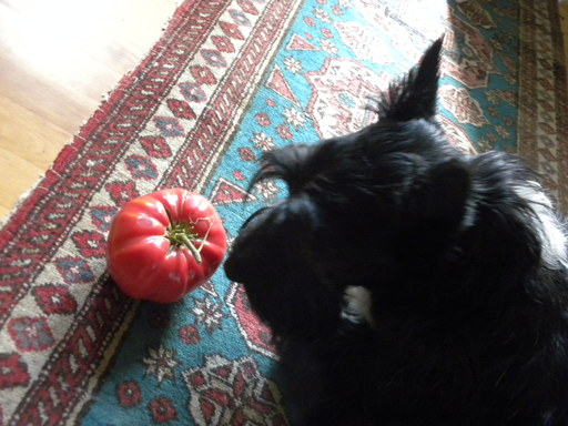Maybe I should go on a tomato diet?