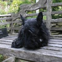 Is It A Scottie Obsession?