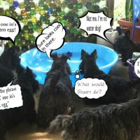 Friday's Foto Fun - A Scottie Pool Party