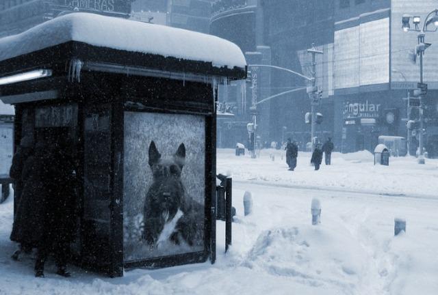 Snow Stop Stuart