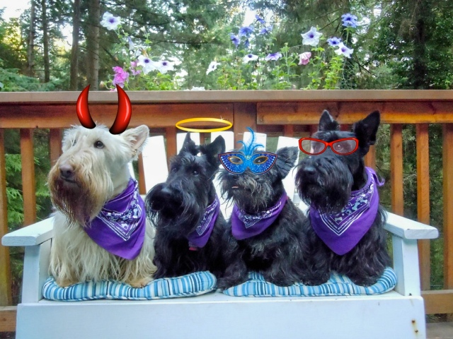 Scotties on a Bench