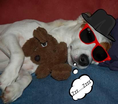 My buddy Django decided to sleep through the trauma.