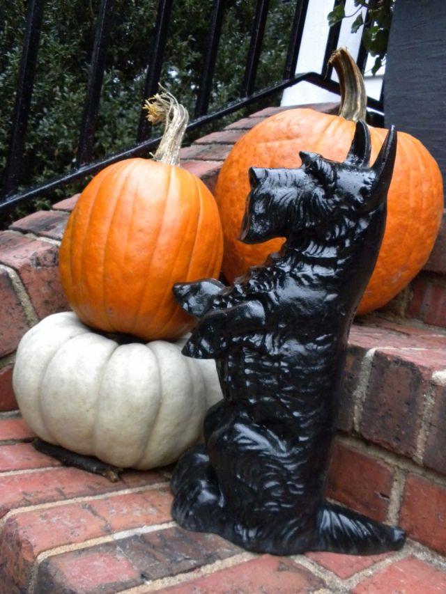 shiny scottie with pumpkin