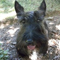 A Scottie By Any Other Name Would Smell As Sweet...?