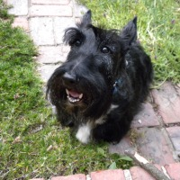 Saturday Scottie Smile