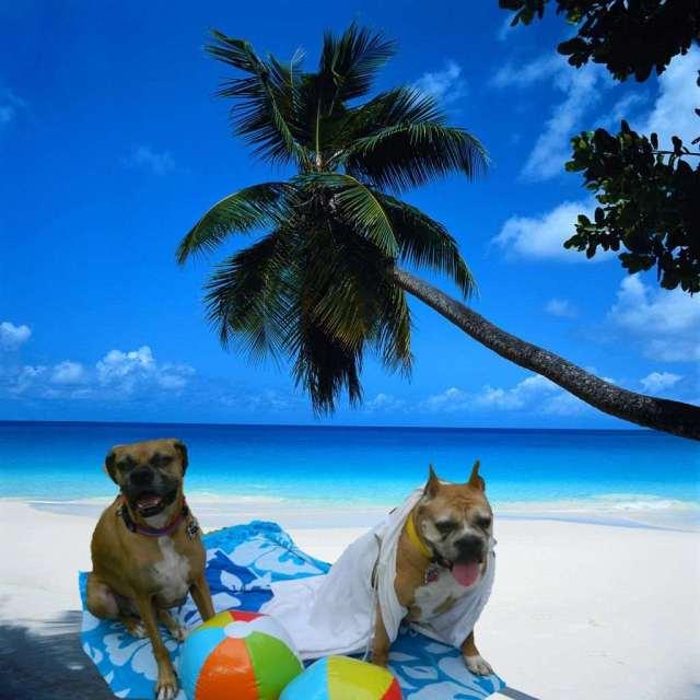 BeachParty CaseyCinderella