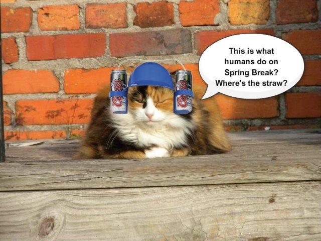 beer hat kittie