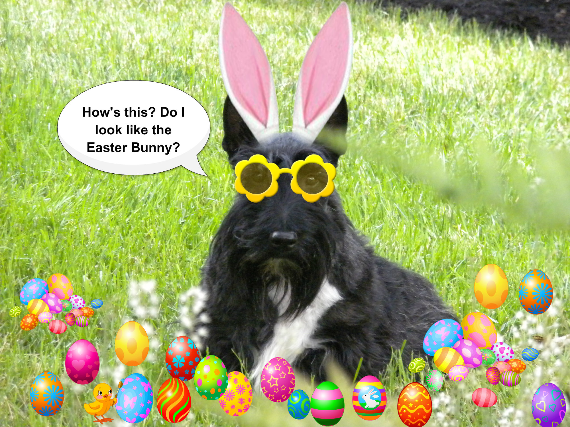 it u0027s me u2013 the easter bunny the scottie chronicles