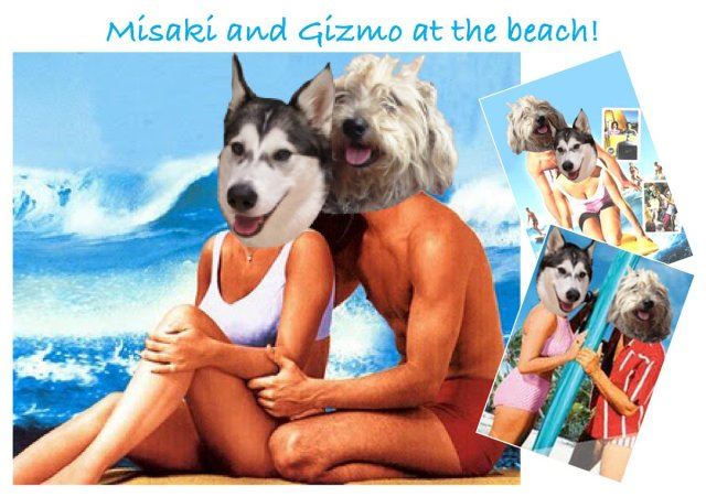Misaki and Gizmo's beach party photo