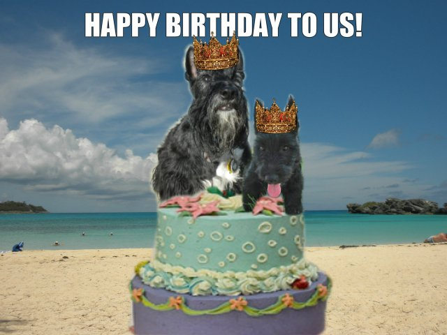Whoa! Here We Are! The Barkday Kings!
