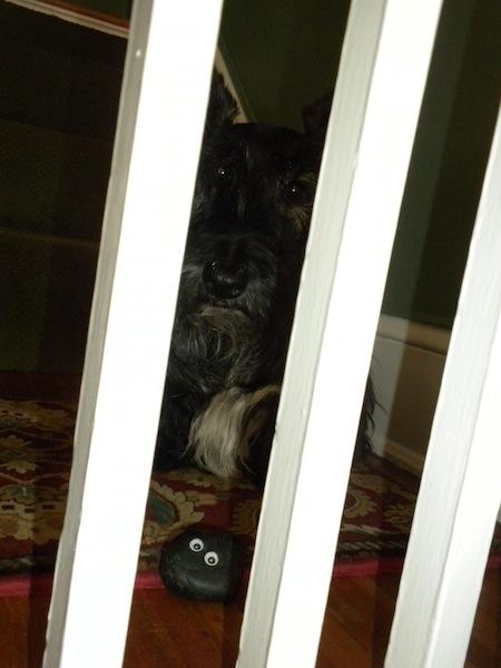 bashful behind bars