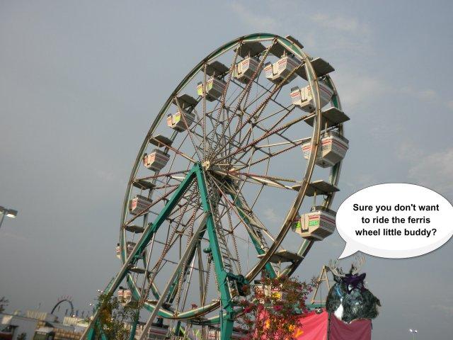 bashful ferris wheel
