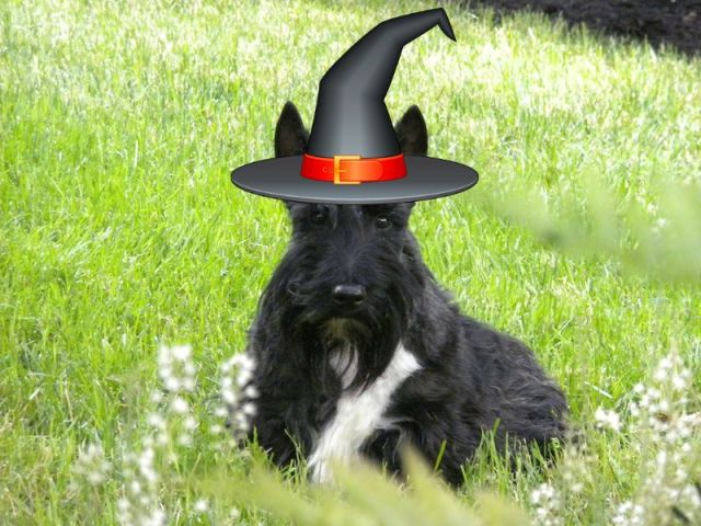 Halloween Hat Stuart