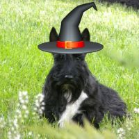 Friday's Foto Fun - Spooky Stuart
