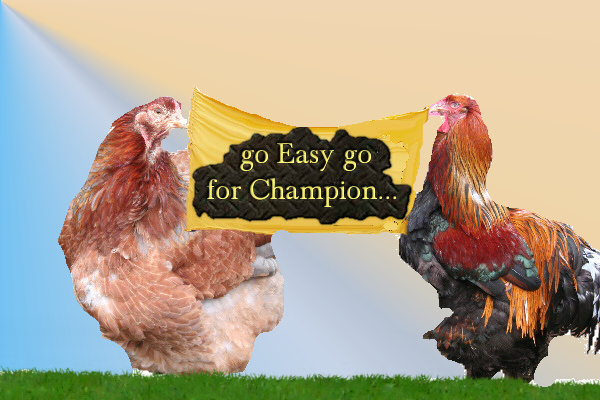 Easy's Chicks!