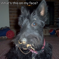 Friday's Foto Fun - Noodle Dog