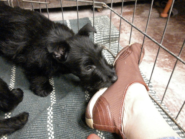 Don't leave just yet...I've got to chew on this shoe. just for a minute.