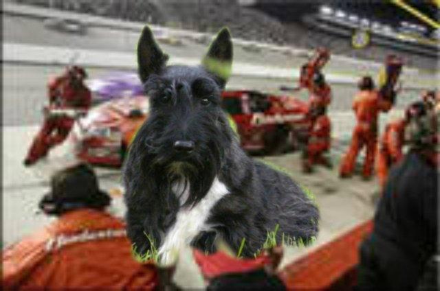 racing Stuart
