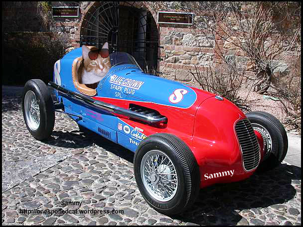 Wait folks! Another purrrrfect racer in lane 10. It's Sammy!