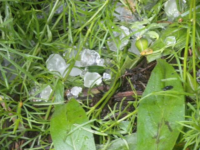 Ice-cube-sized hail.