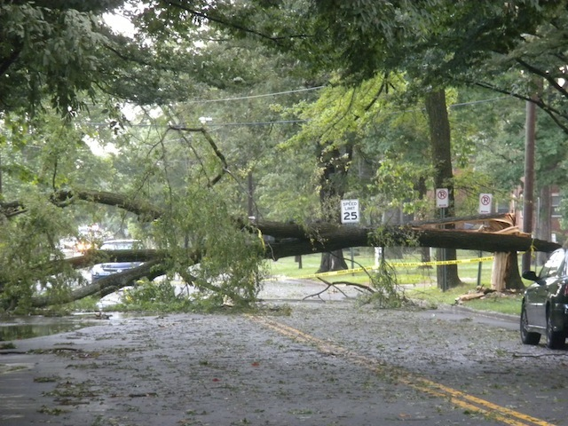WOW. This tree just broke in two.