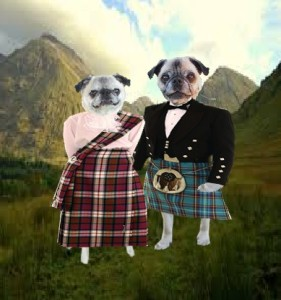 Hazel and Bailey highlandpugs