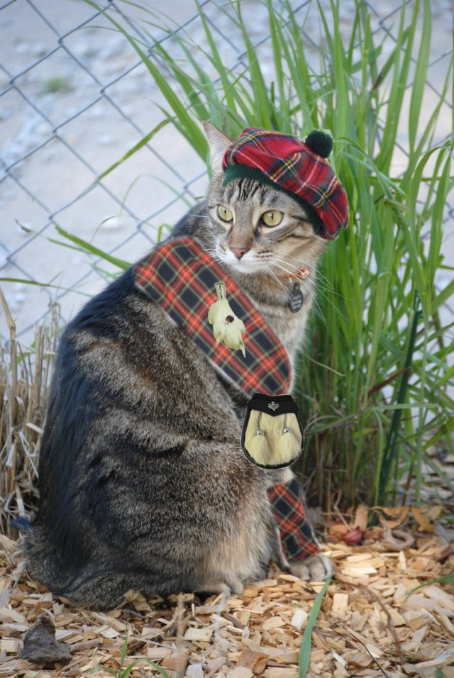 Friday's Foto Fun - Cats in Tartans