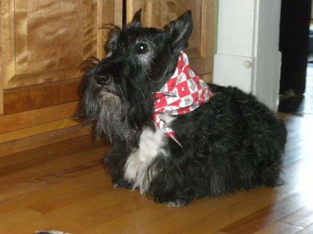 my bandana 2
