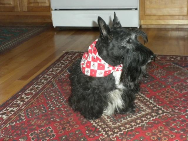 my bandana