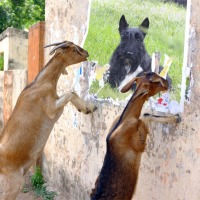 Friday's Foto Fun - You Old Goat