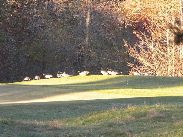 Keswick geese