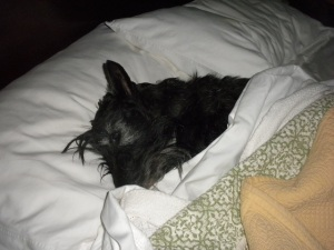 stu sleeping
