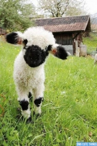 happy-sheep-daily-5-omg-cute-things-080212-03