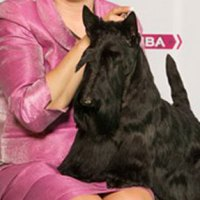 A Scottie Takes Crufts!!!