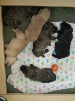 puppies 2 7-31