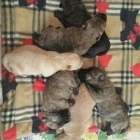 Friday's Foto Fun - More Puppies!