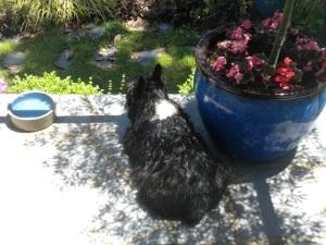 at the water bowl