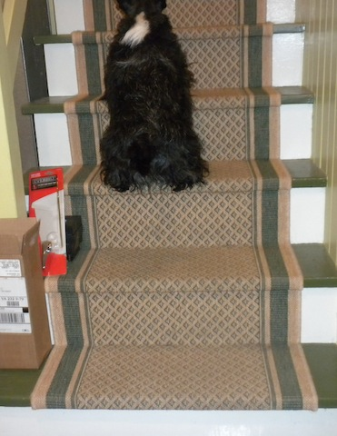 Yippee! Here I go!! Up the stairs for dinner time!