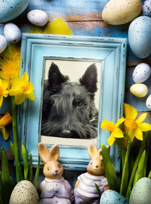 Easter Bunny 16.jpg